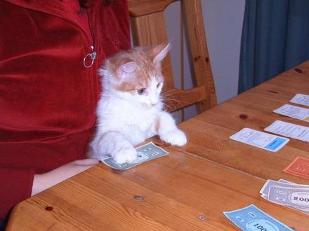 cat plays monopoly