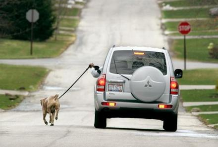 walk the dog while driving the car