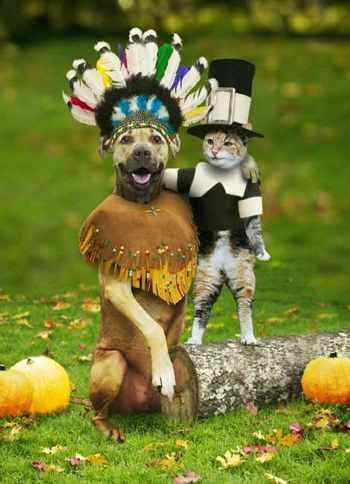 dog and cat thanksgiving